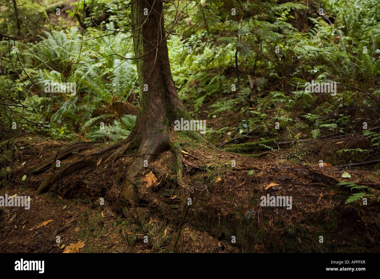 A tree's roots search for nutrients in the rocky soil of the Stock ...