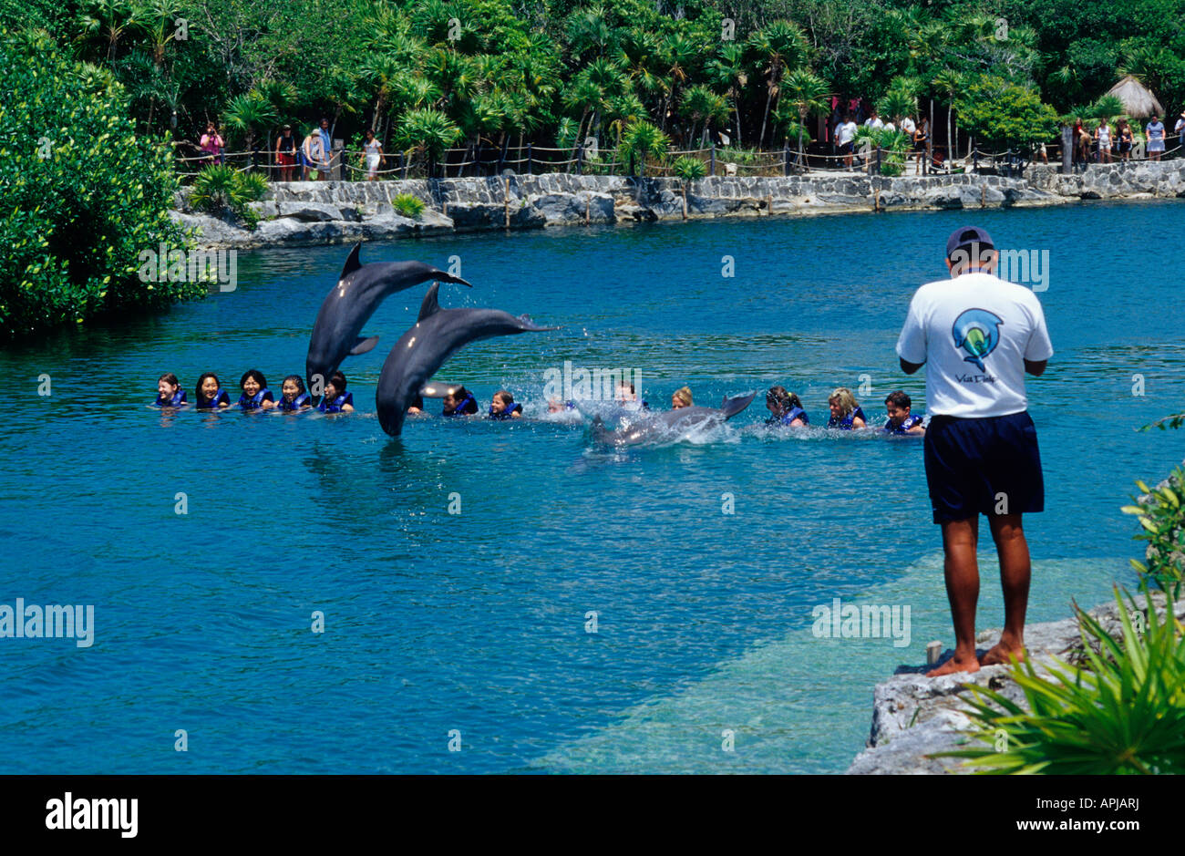 Xel Ha Cancun Dolphins