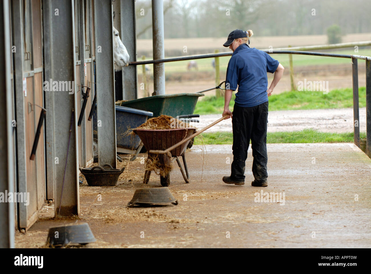 Stock Photo A Stable Worker Groom Hand Mucking Out In The Morning At A Large Stables 15844872 on Free Princess Learning Pack For