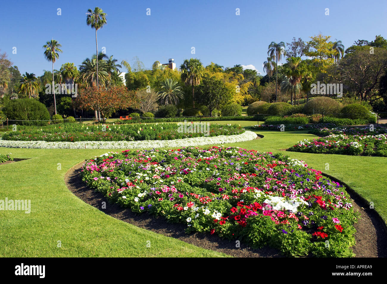 Flower garden city botanic gardens brisbane queensland for Landscape gardeners brisbane
