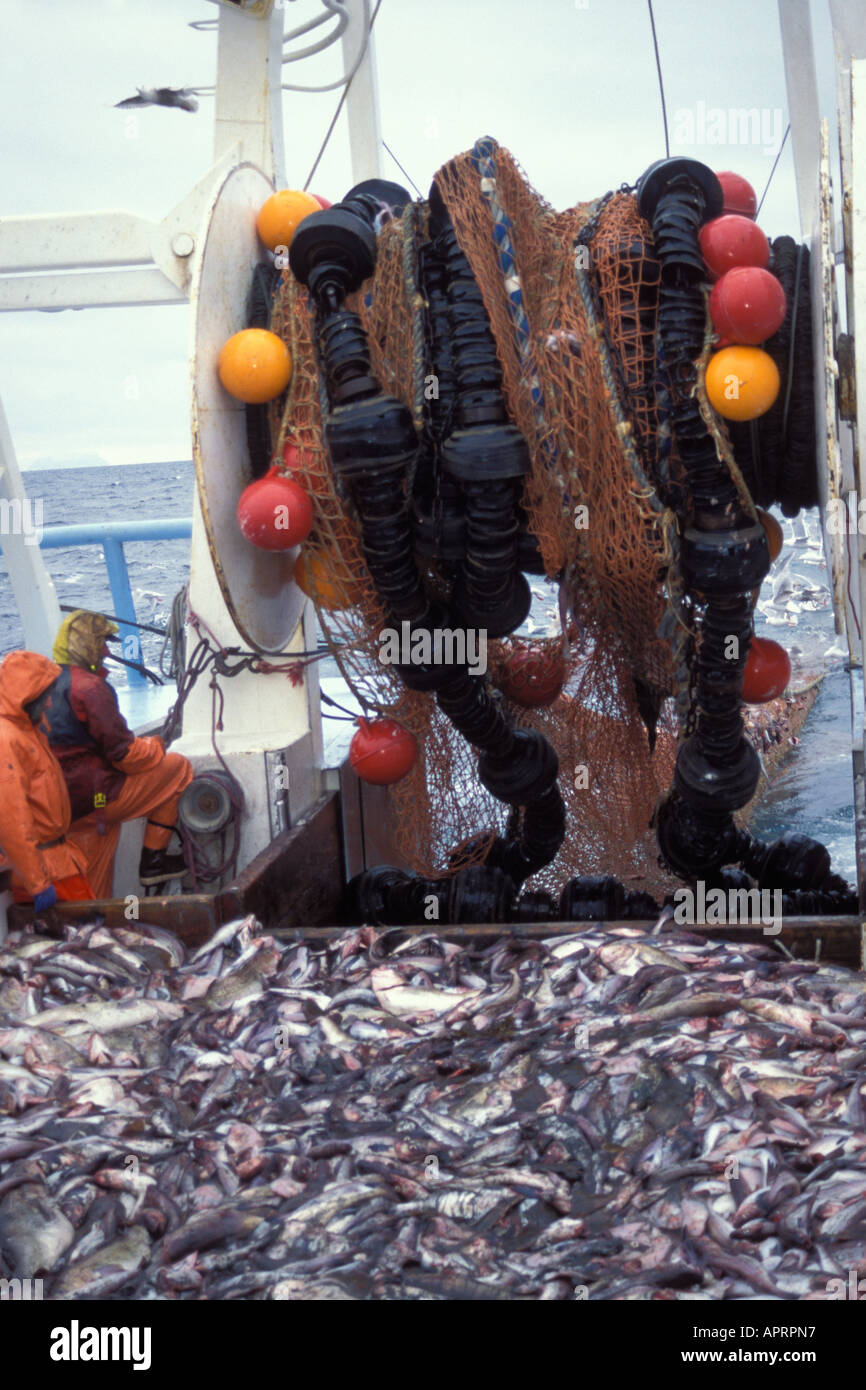 Commercial fishing vessel drag net of bycatch off the for Drag net fishing