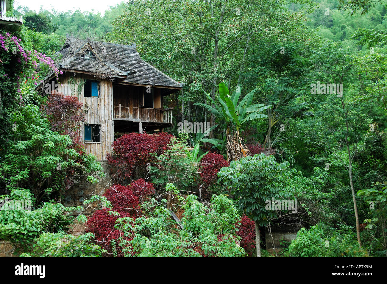 A traditional wooden house in the lush green of the xishuanbanna rain forest xishuanbanna district yunnan china