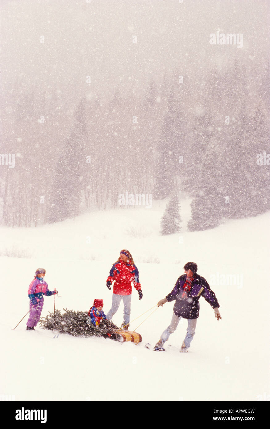 A Happy Family Hauls Their Newly Cut Christmas Tree Through A Snowstorm