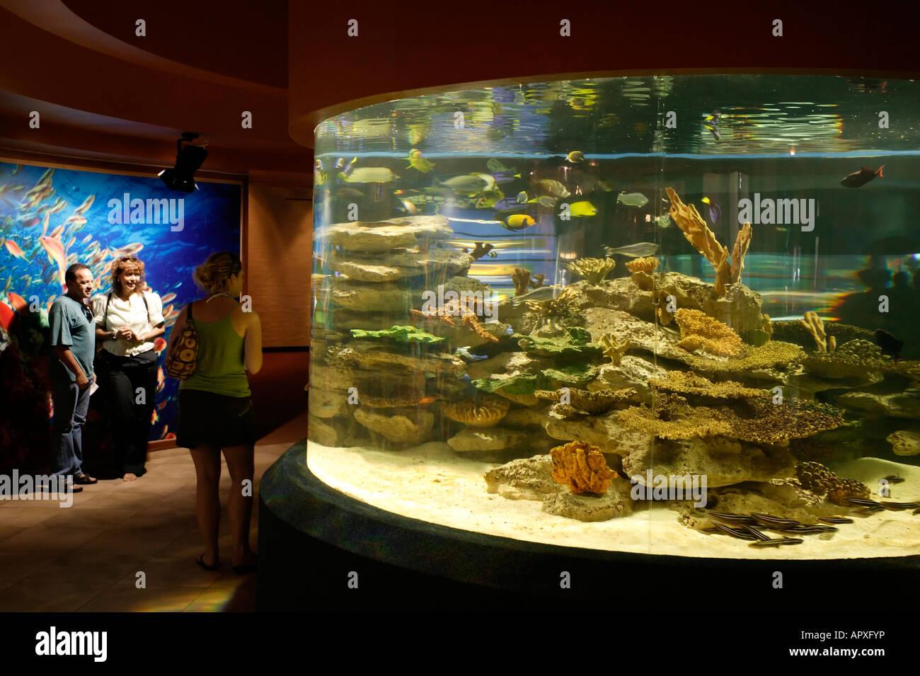 Freshwater aquarium fish cape town - Stock Photo The Two Oceans Aquarium In Cape Town