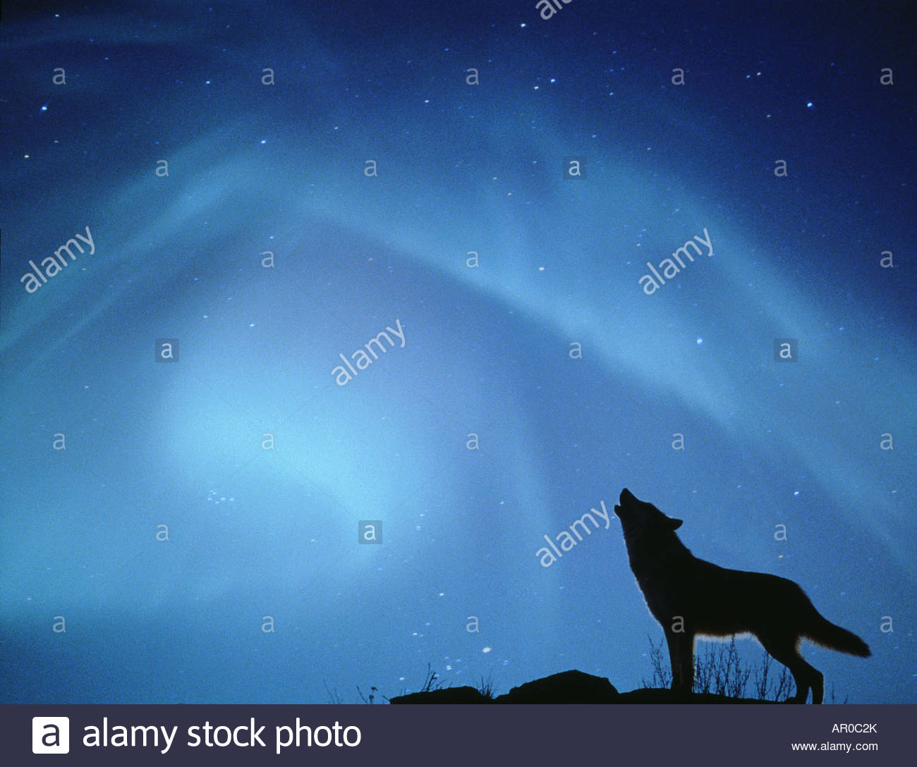 real northern lights wolf - photo #1