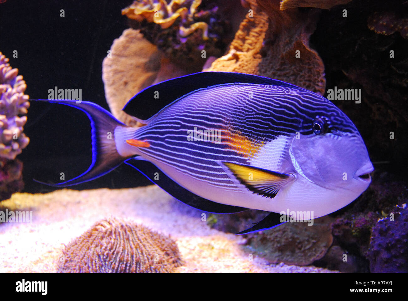 Tropical Fish, Coral World Underwater Observatory And Aquarium Stock ...