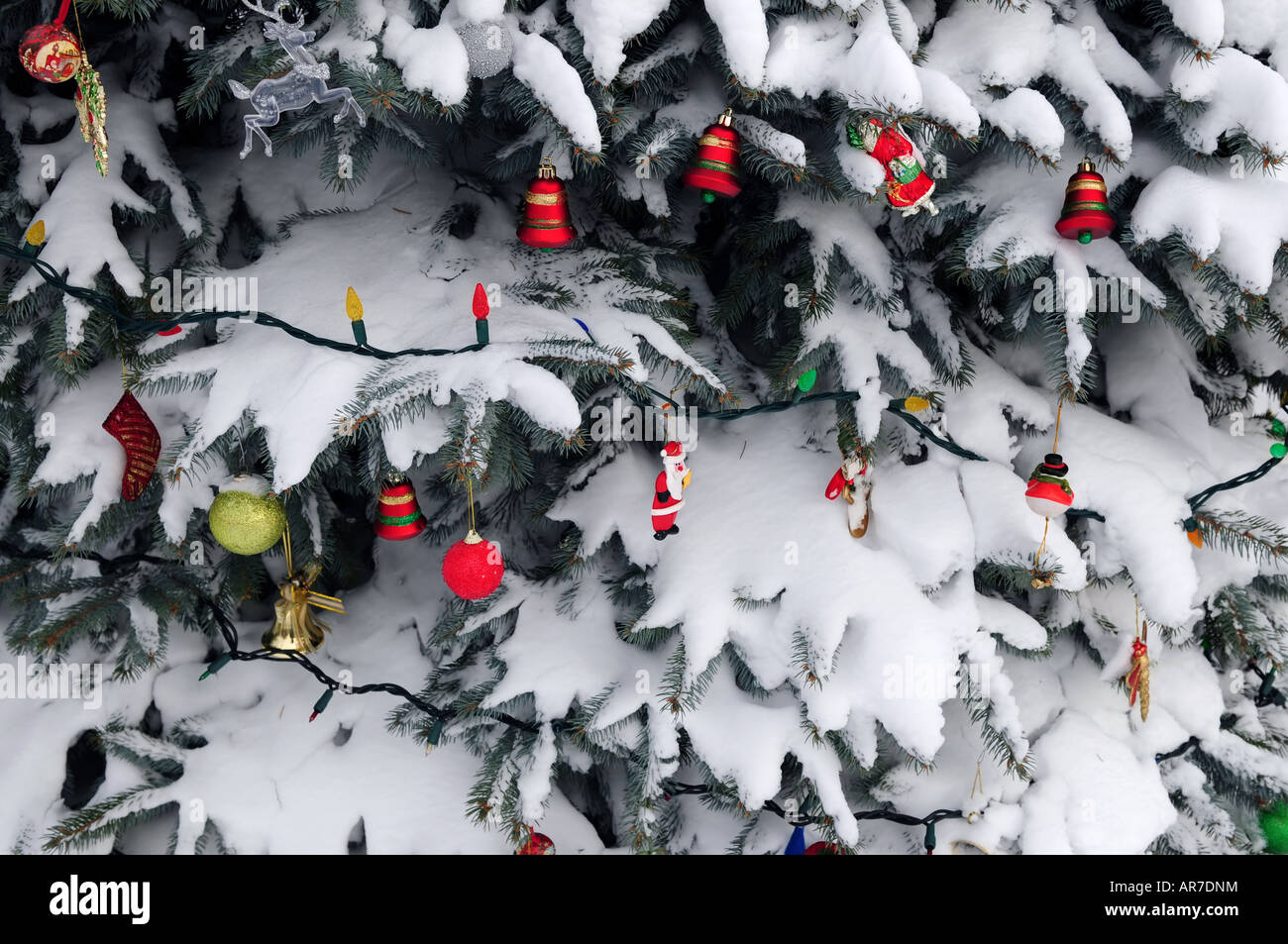Outside ornaments - Christmas Ornaments Hanging On Snow Covered Spruce Tree Outside