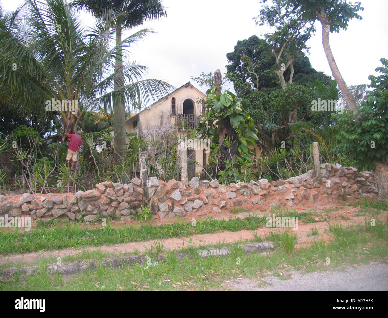 man gathering coconuts near the famous and ghosty haunted house of