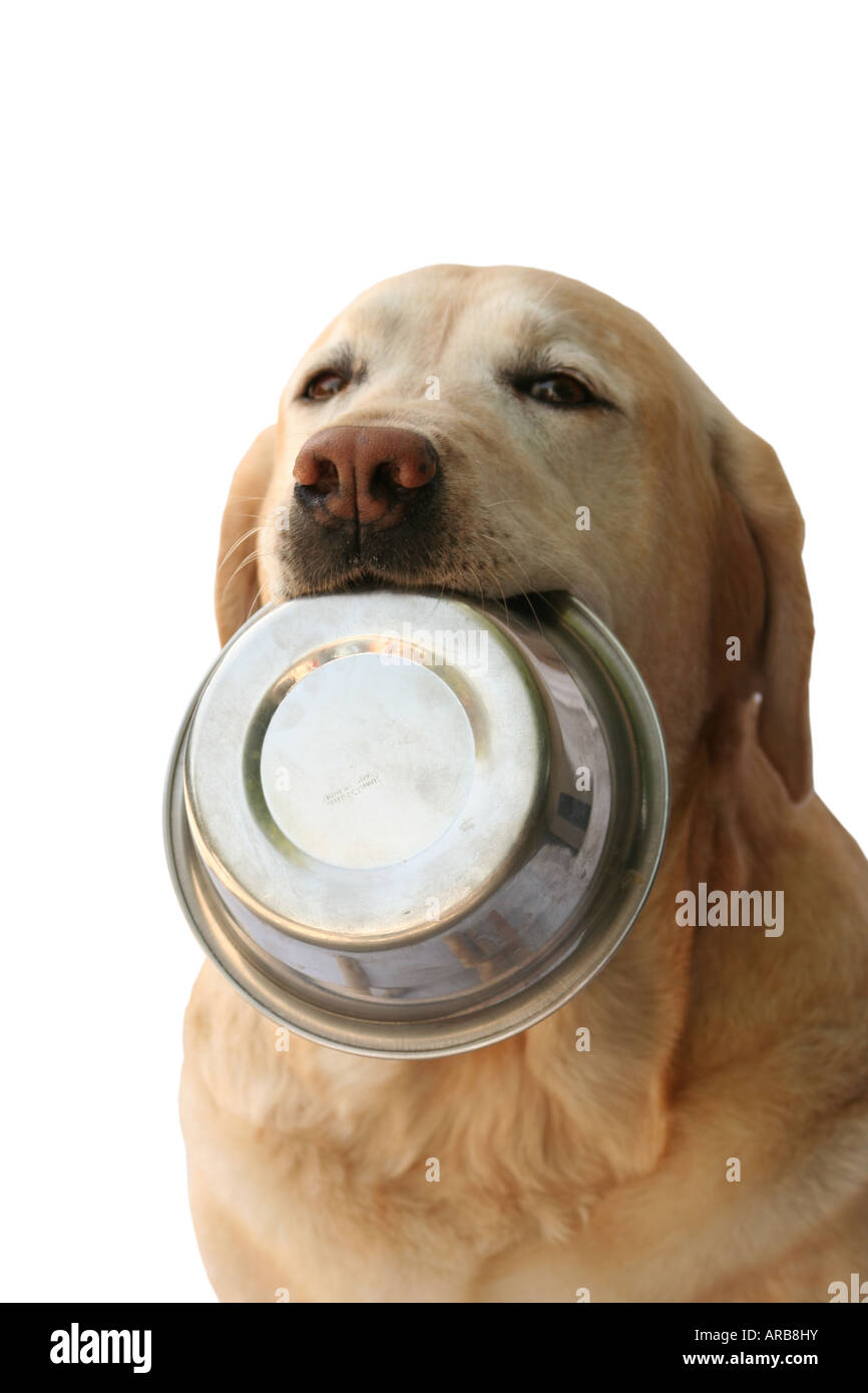Dog Holding A Food Bowl In Its Mouth Begging For Food