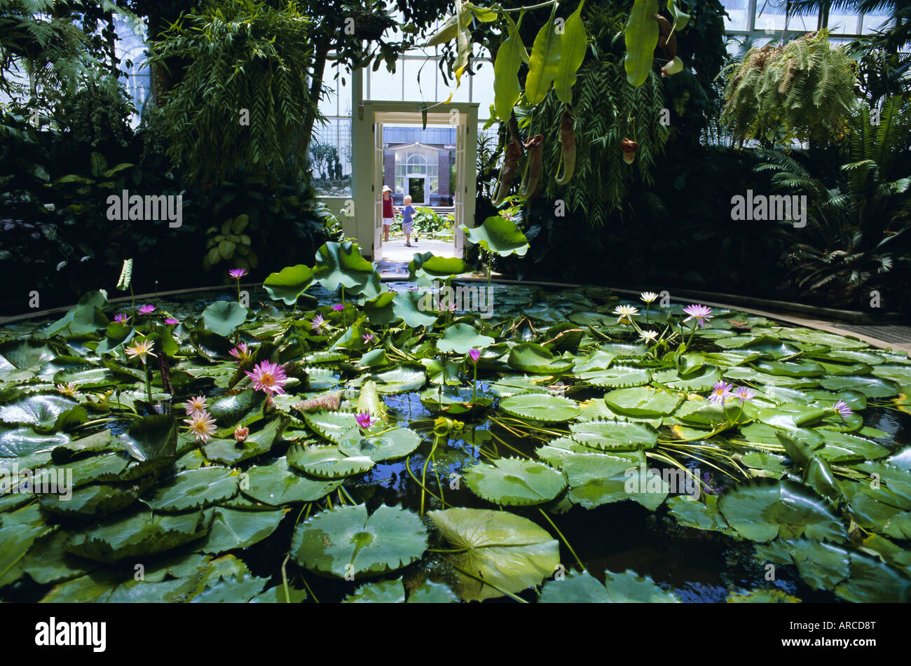 house lily pond winter gardens domain park auckland north