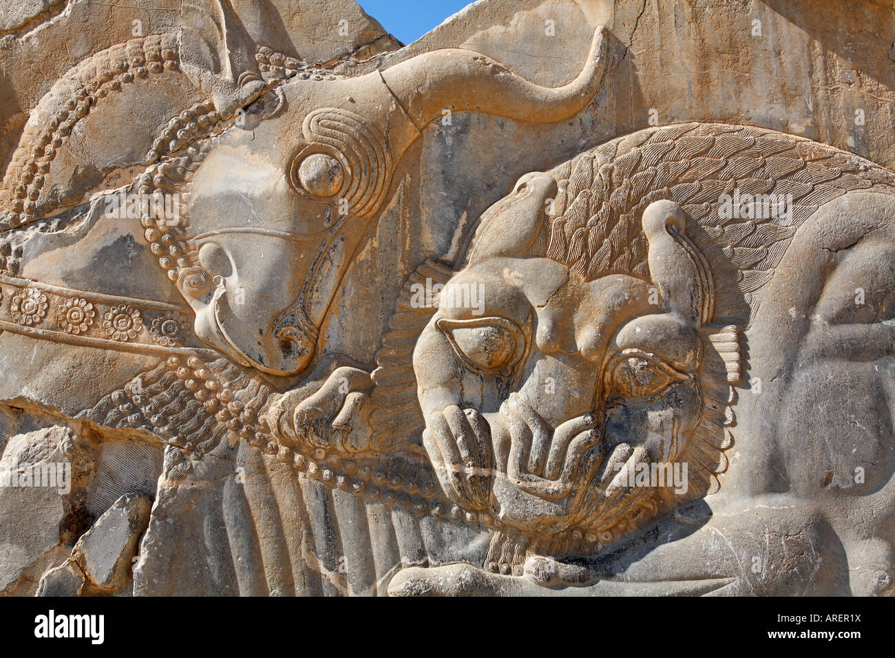 Bas relief carving of a lion hunting bull at perspolis
