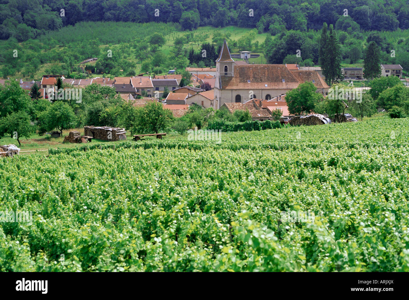 Cotes de toul vineyards village of lucey meurthe et for Chambre agriculture meurthe et moselle