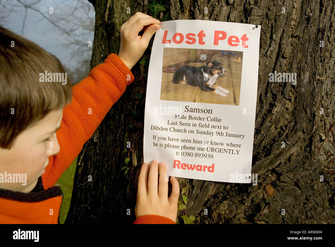 lost puppy essay Essay 2 : my pet 08:58 | by i think it is from his experience, lost in the orchard labels: exercises 10 comments i need to write a essay about my pet.