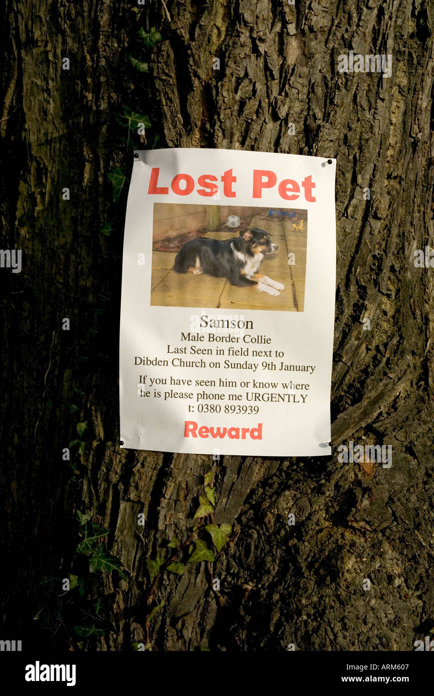 Lost Pet Poster Of A Dog Attached To Tree  Lost Dog Poster Template
