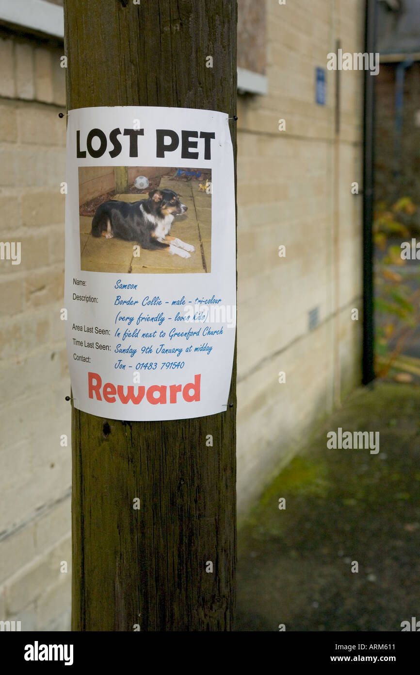 Lost Pet Poster Of A Dog Attached To Telegraph Pole  Lost Pet Template