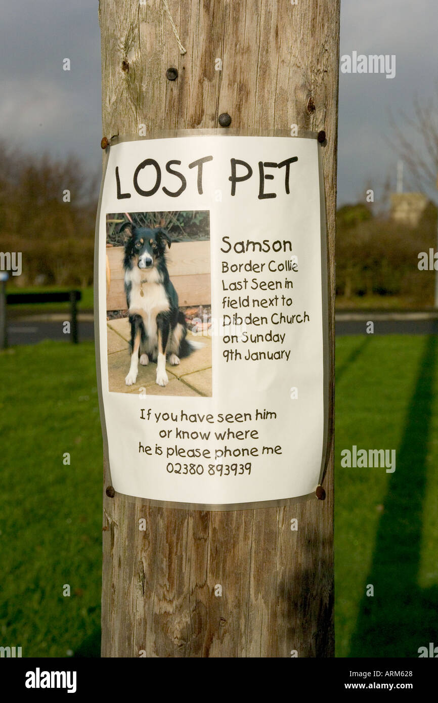 Lost Pet Poster Of A Dog Attached To Telegraph Pole  Lost Pet Poster