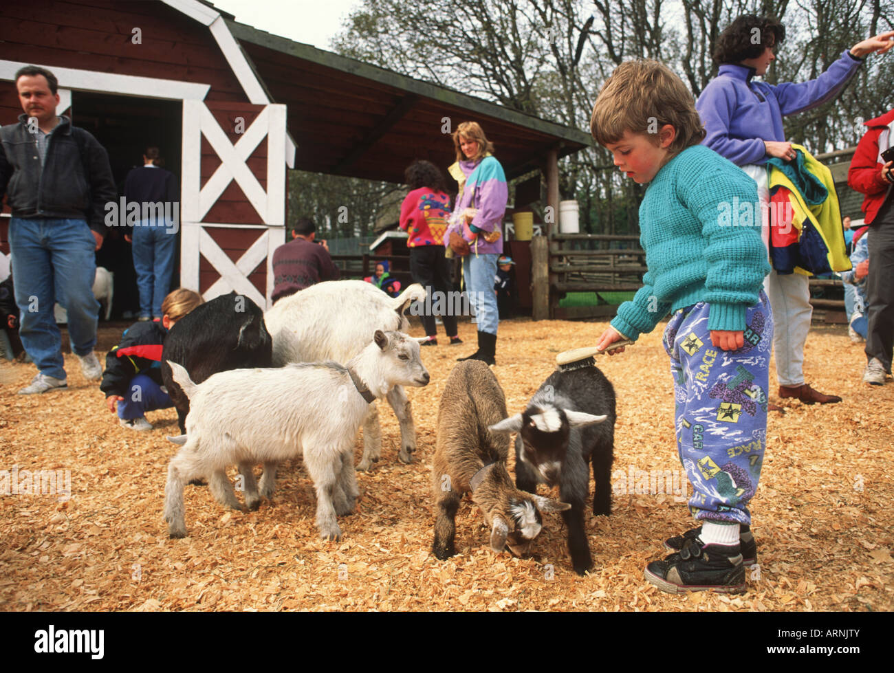 Young Boy Petting A Goat In The Petting Zoo In Beacon Hill
