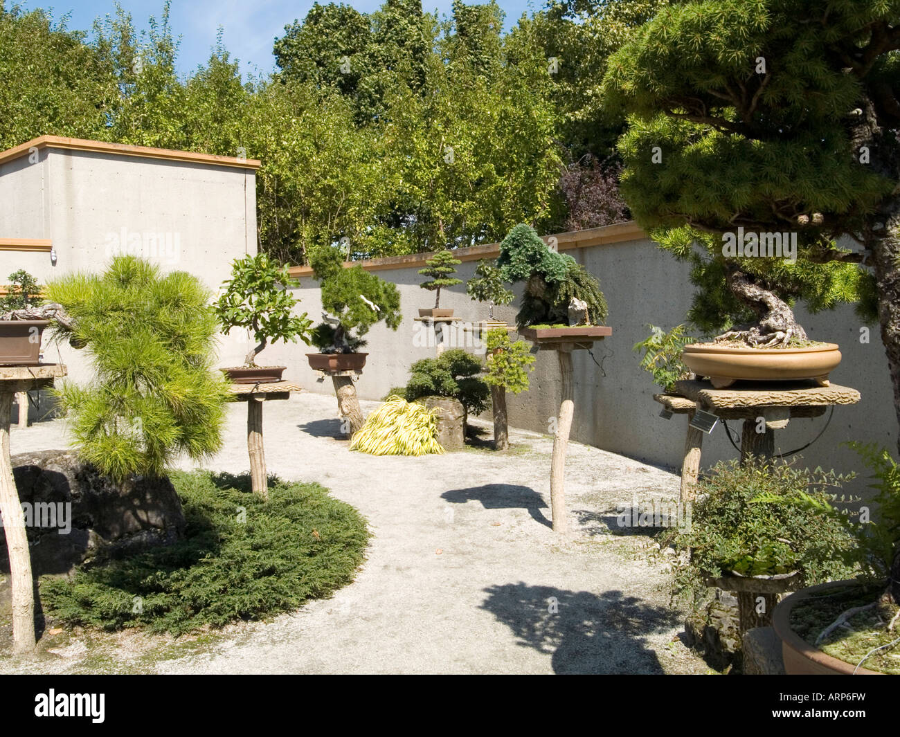 A collection of bonsai trees at the jardin botanique de for Bonsai de jardin