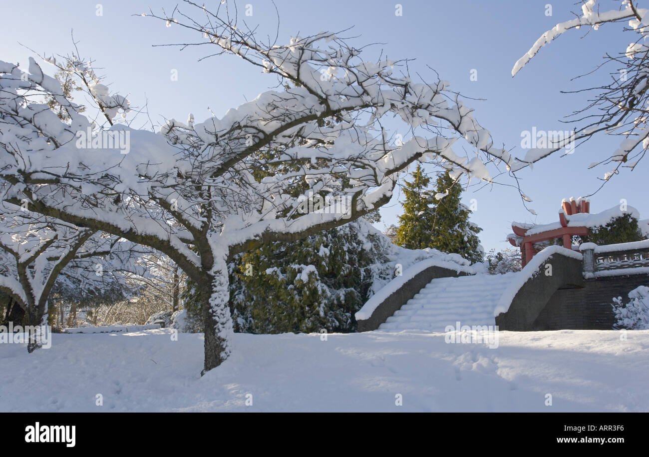 trees covered by heavy wet snow garden memorial to chinese