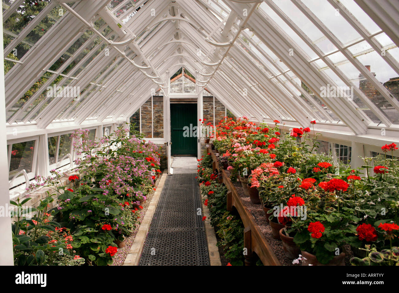 Inside A Victorian Greenhouse Stock Photo Royalty Free