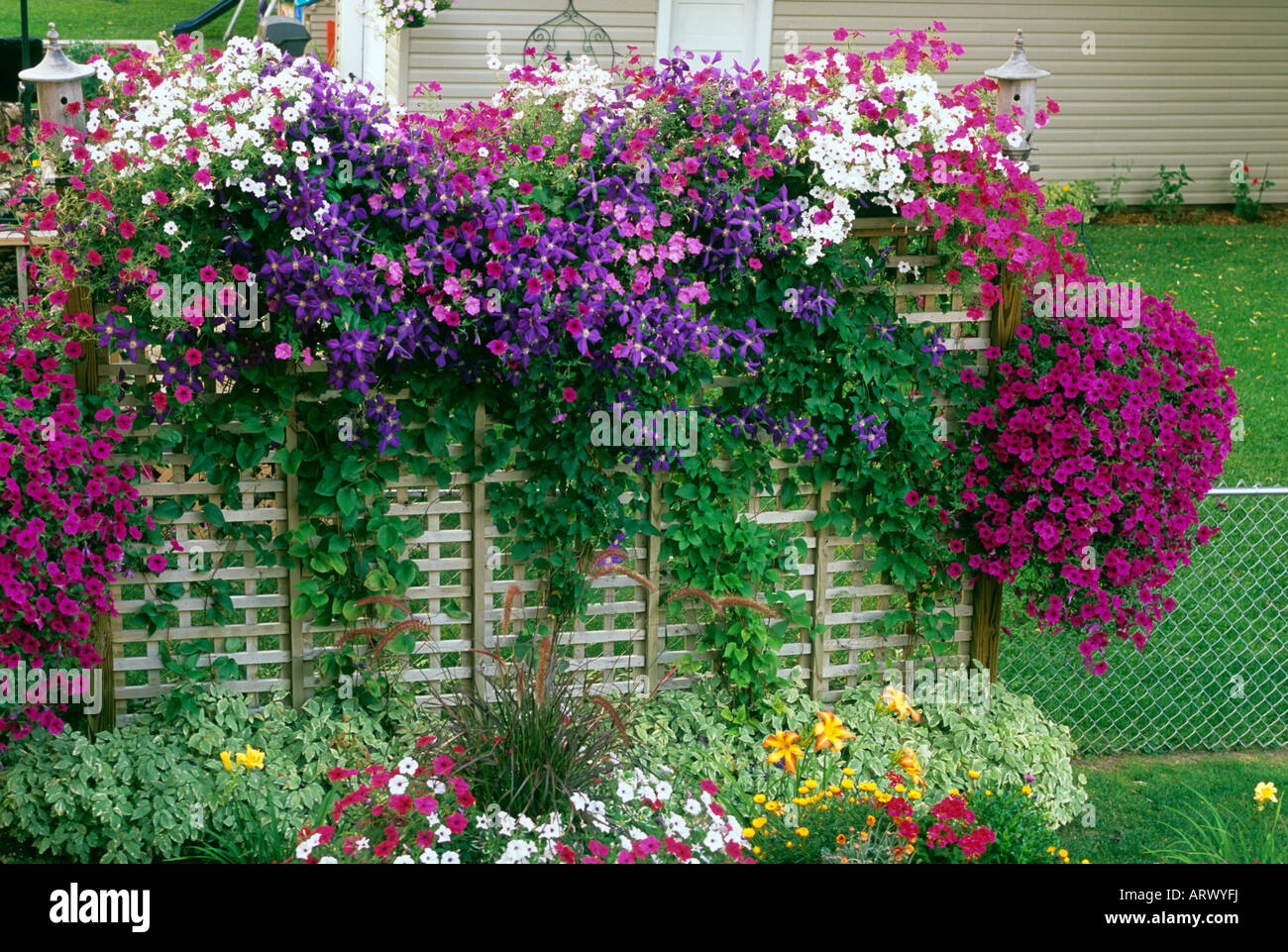 Small Space Gardening Privacy Fence In Minnesota Garden With Petunias Clematis