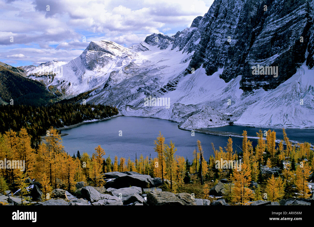 Larch in fall colour floe lake the rockwall kootenay national park larch in fall colour floe lake the rockwall kootenay national park british columbia canada sciox Image collections