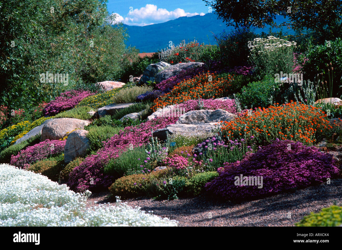 Alpine Rock Garden Yampa River Botanic Park Steamboat Springs Stock Photo Royalty Free Image