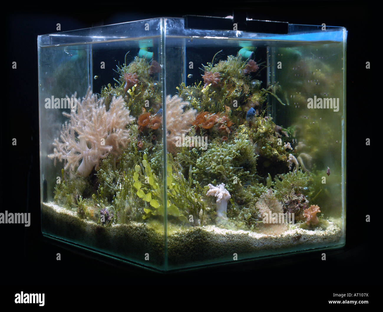 Small nano aquarium fish tank tropical - Nano Reef Small Tropical Marine Aquarium Stock Image