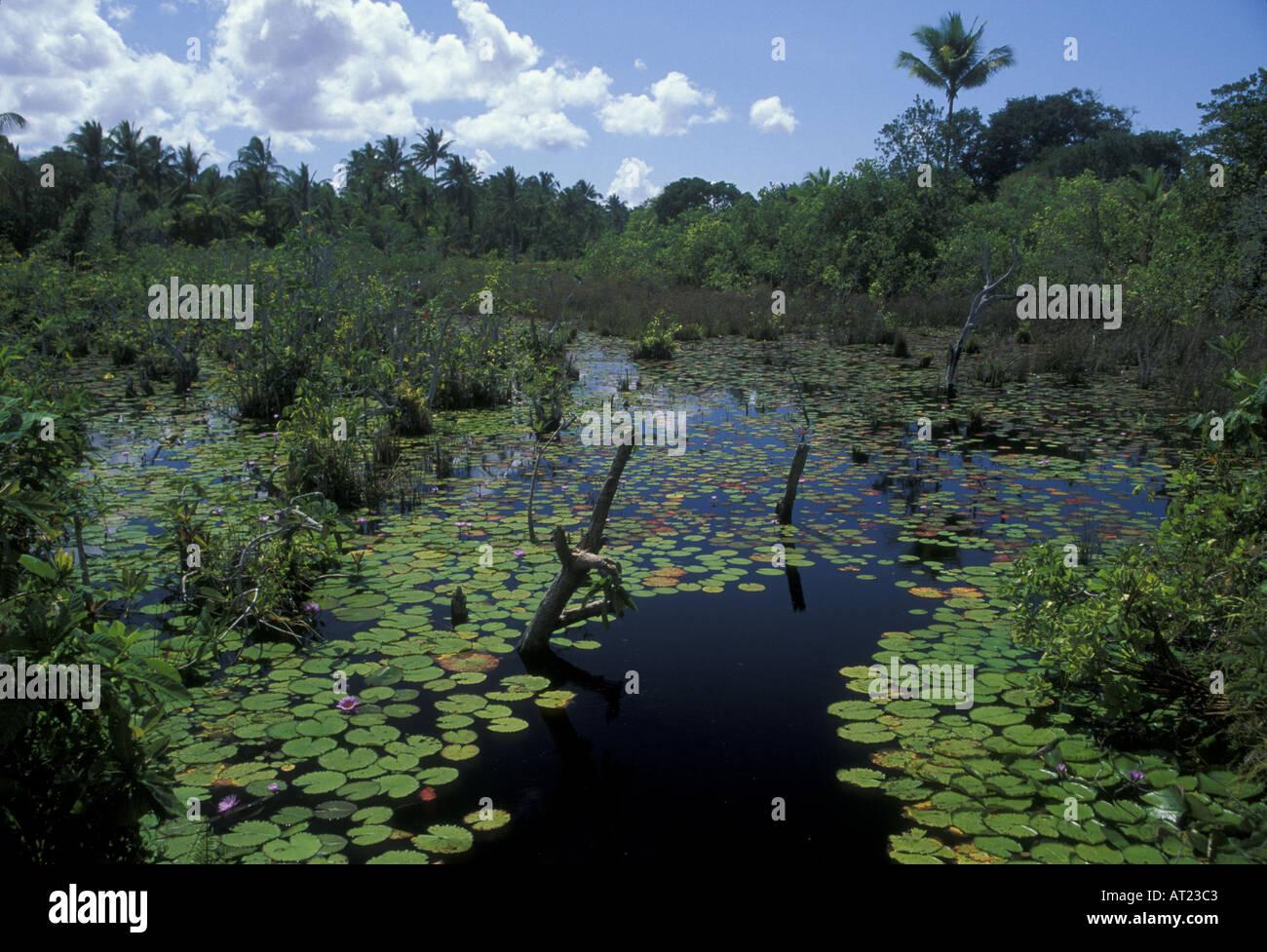 Mafia Island freshwater swamp in the interior Stock Photo, Royalty ...