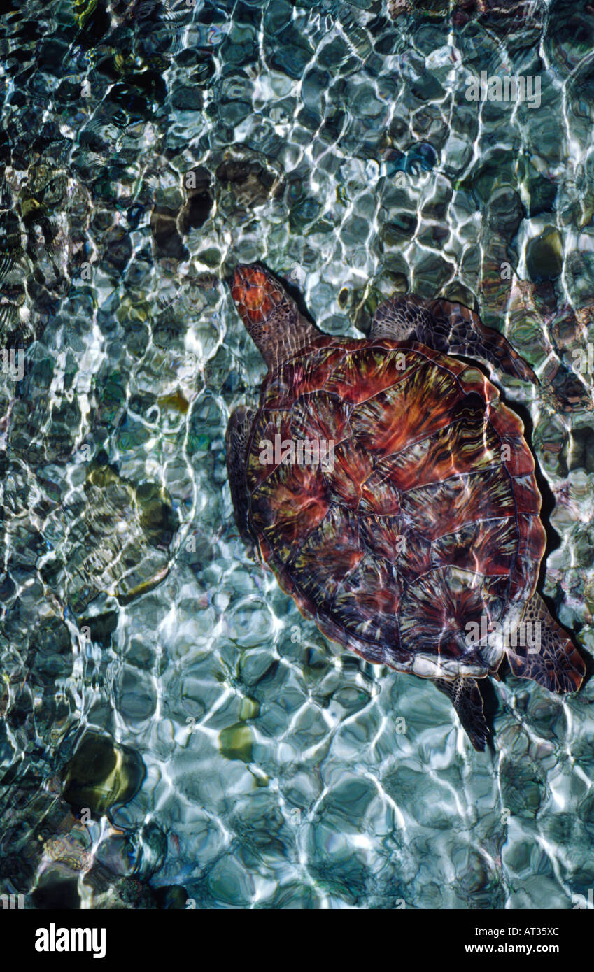 night-photograph-of-turtle-swimming-in-c