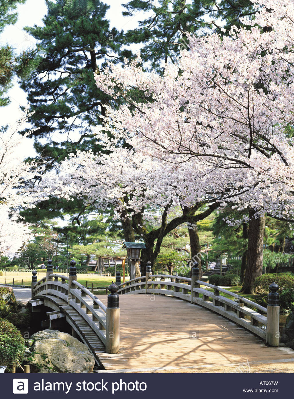 kenrokuen garden cherry blossoms hana mi bridge kanazawa ishikawa japan - Japanese Garden Cherry Blossom Bridge