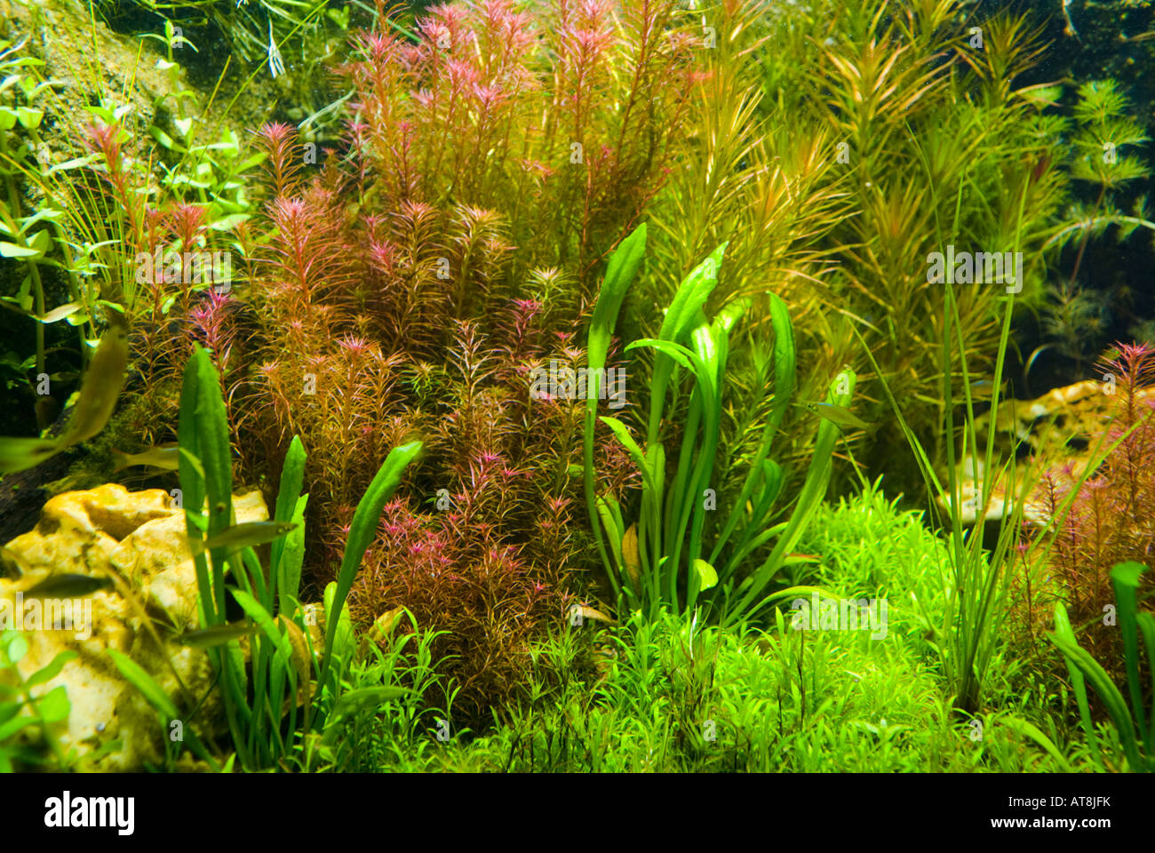 Background Of Freshwater Aquarium Plants Stock Photo, Royalty Free ...