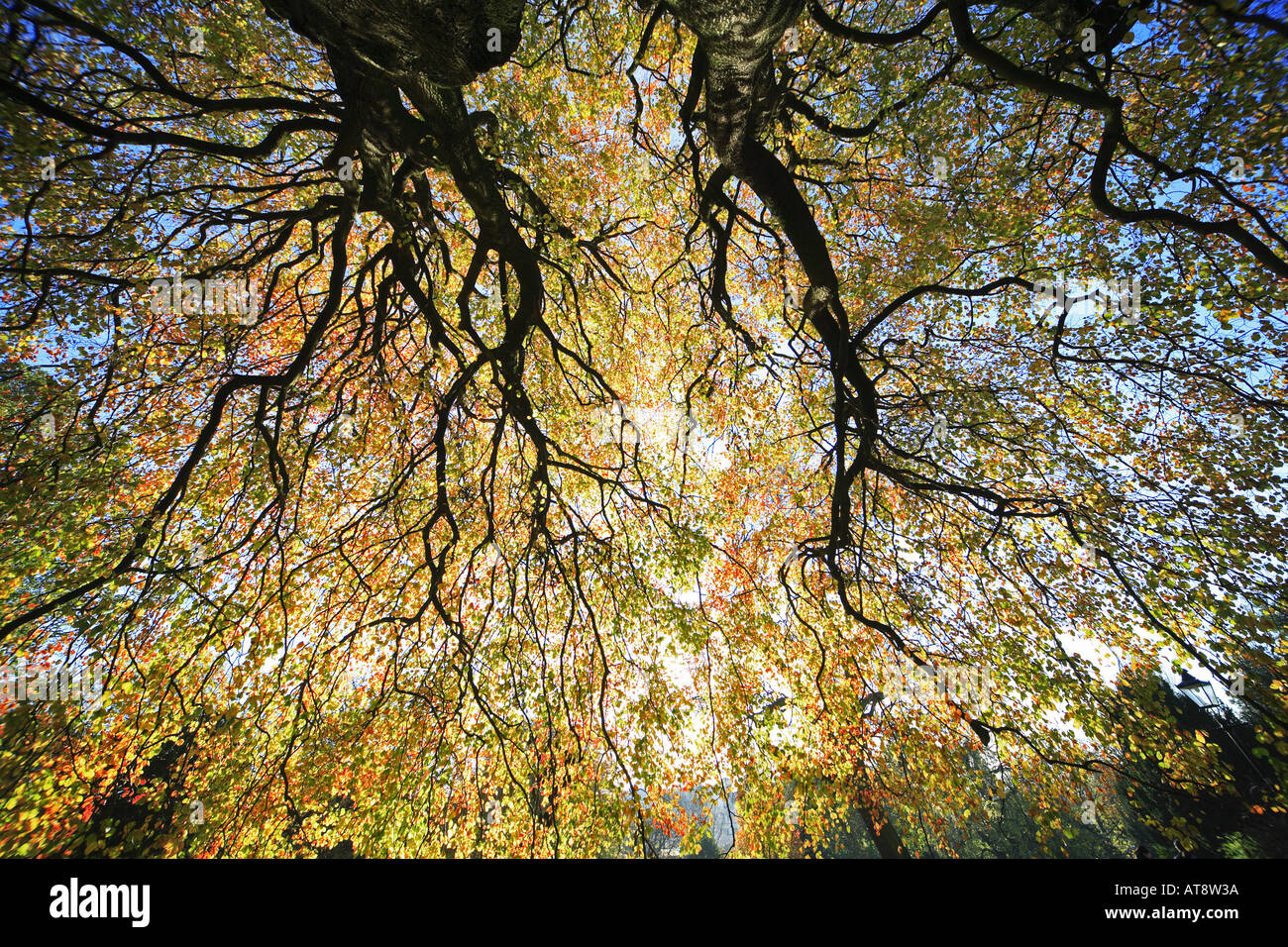 Vast tree canopy wide angle shot in the autumn & Vast tree canopy wide angle shot in the autumn Stock Photo ...