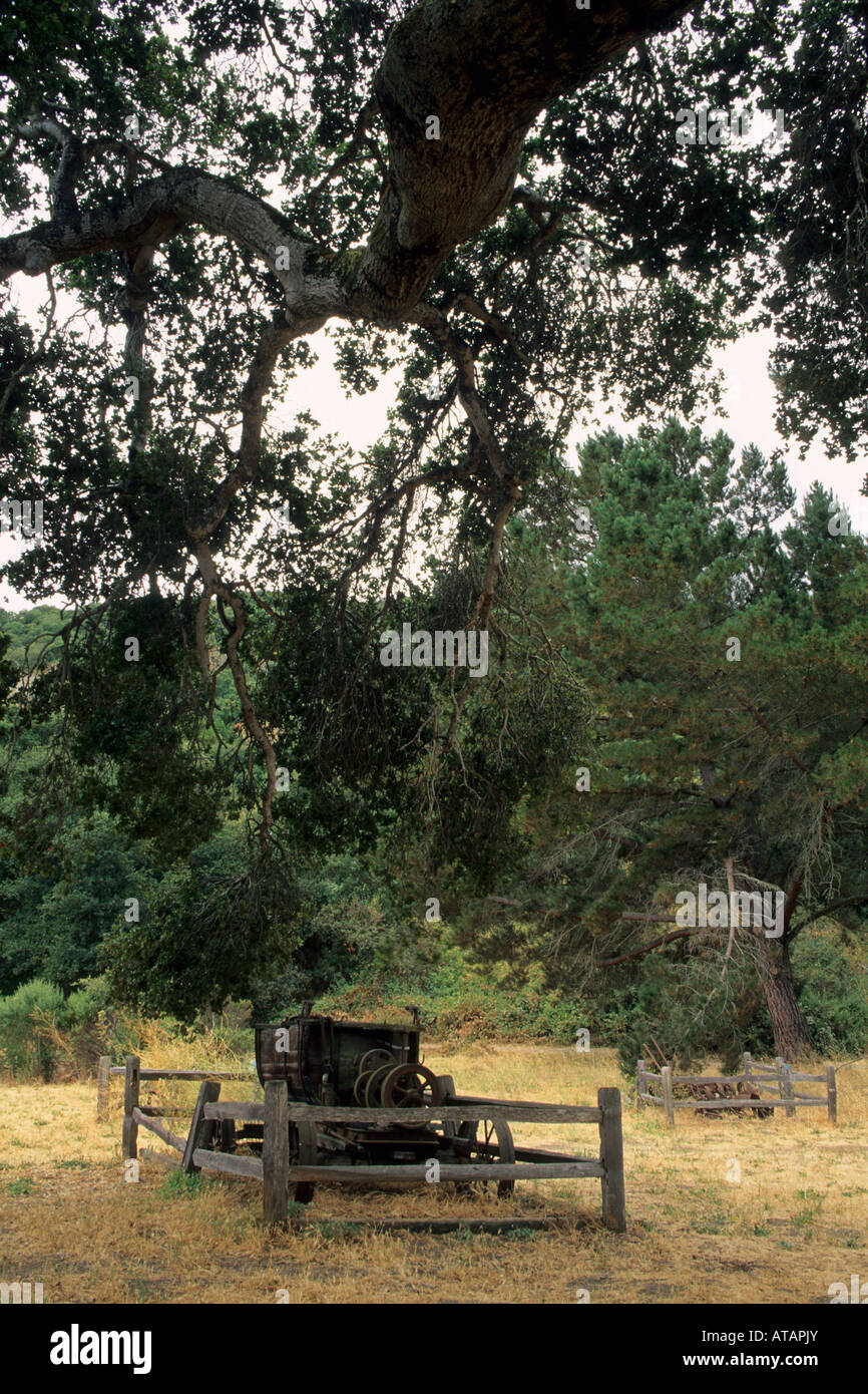 Christmas Tree Farm Equipment. Christmas trees for sale in grocery ...