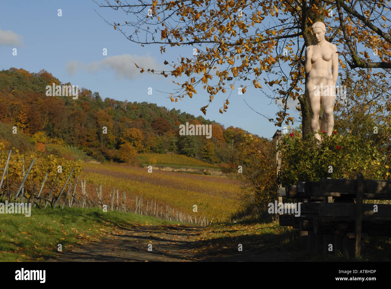 Deidesheim Germany  City new picture : Paradiesgarten Near Deidesheim At The German Wine Route, Germany Stock ...