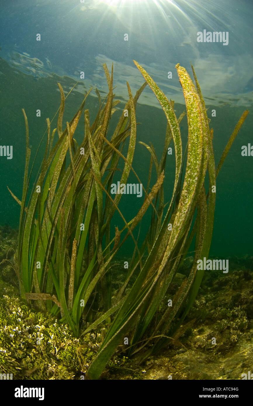 algae, underwater, ocean, sea, scuba, diving, shallow ...