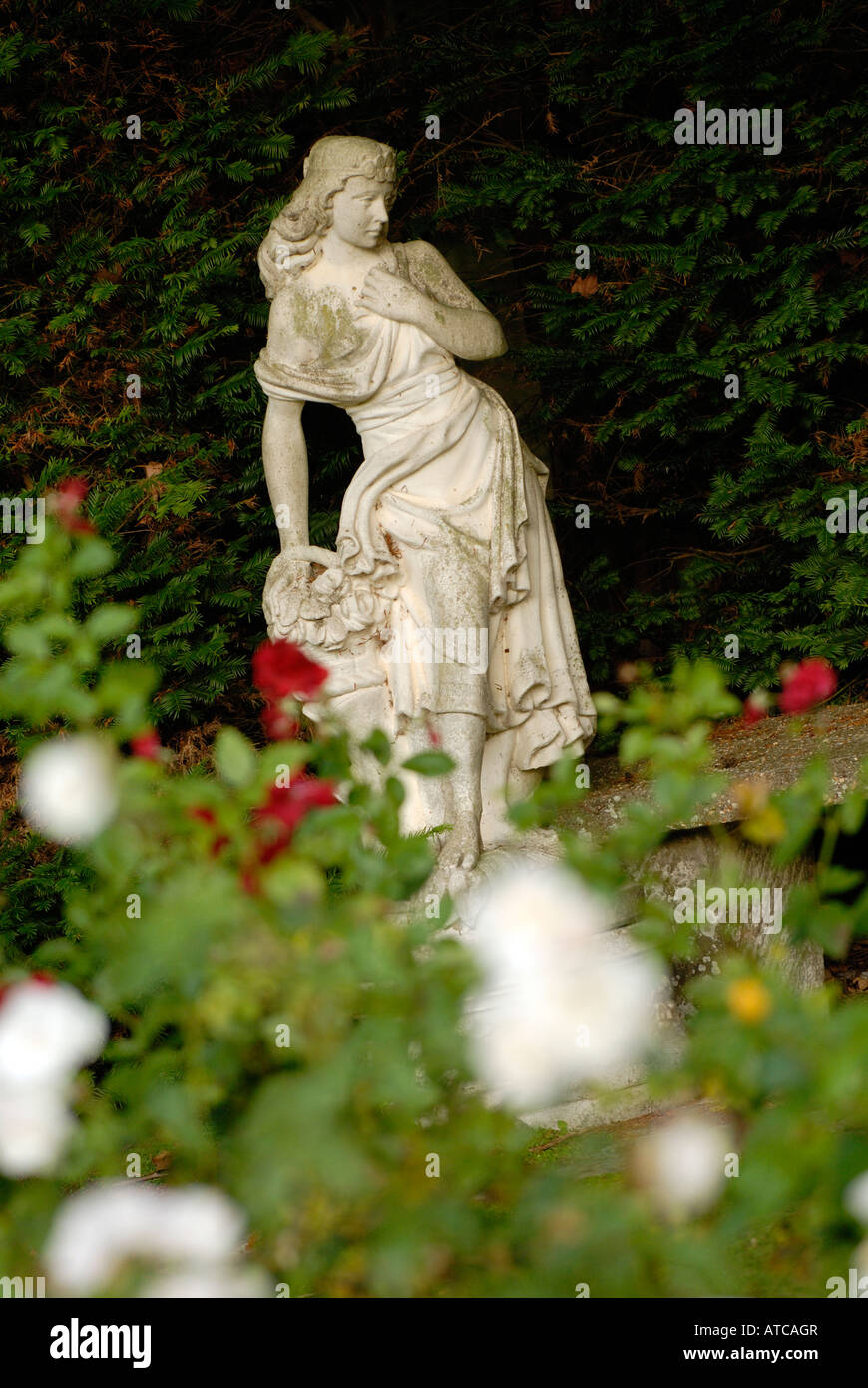A Neo Classical Greek Roman Garden Statue Set Amongst White And Red Roses  In A Landscaped Manor Garden Grounds