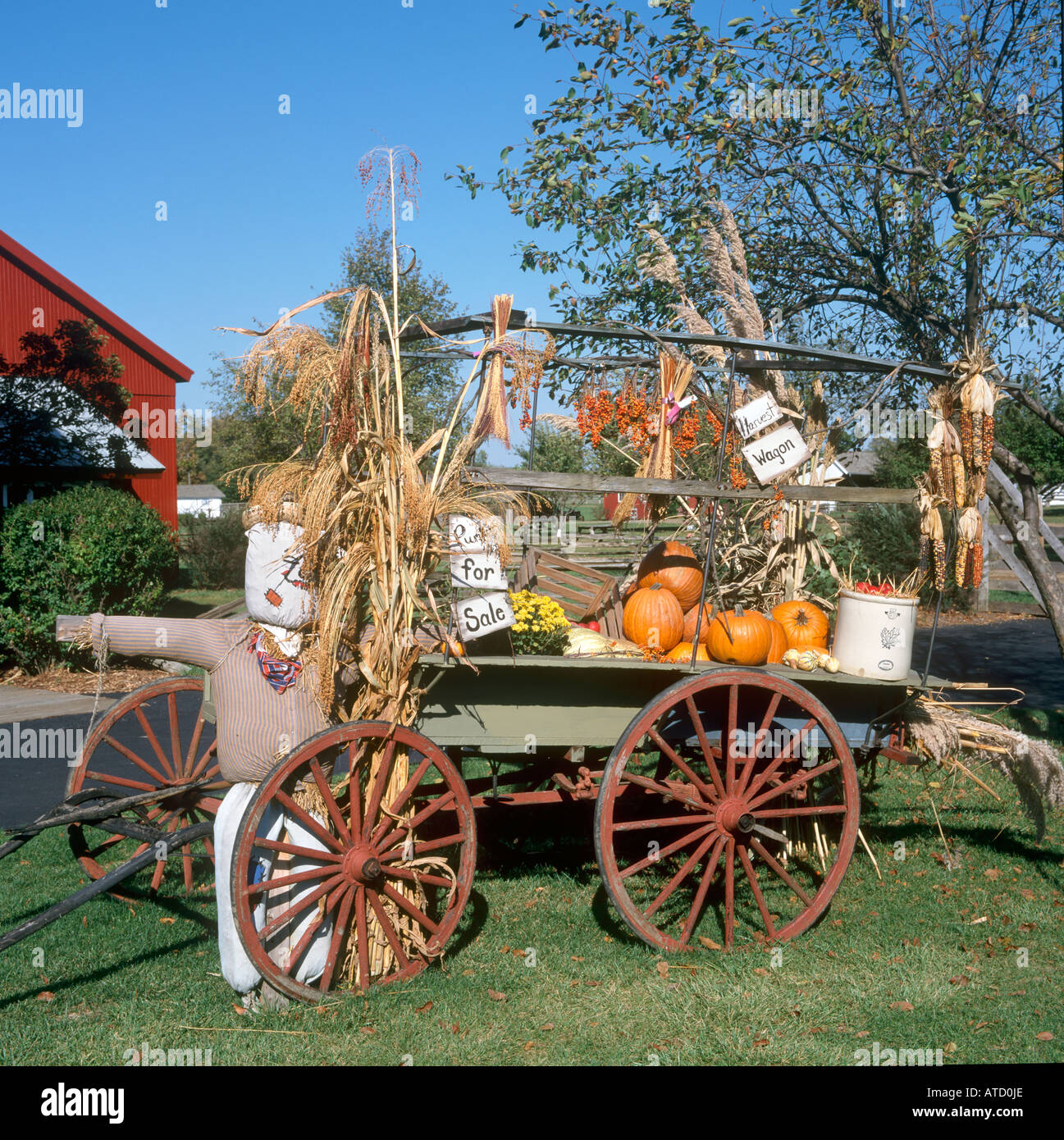 halloween display of pumpkins or squash on cart in amish acres indiana usa - Halloween Indiana