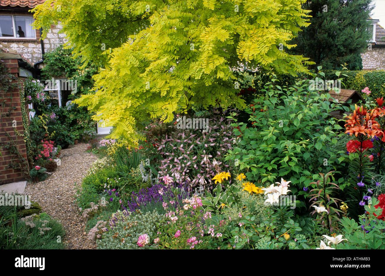 robinia pseudocacia u0027frisia u0027 small cottage garden golden yellow