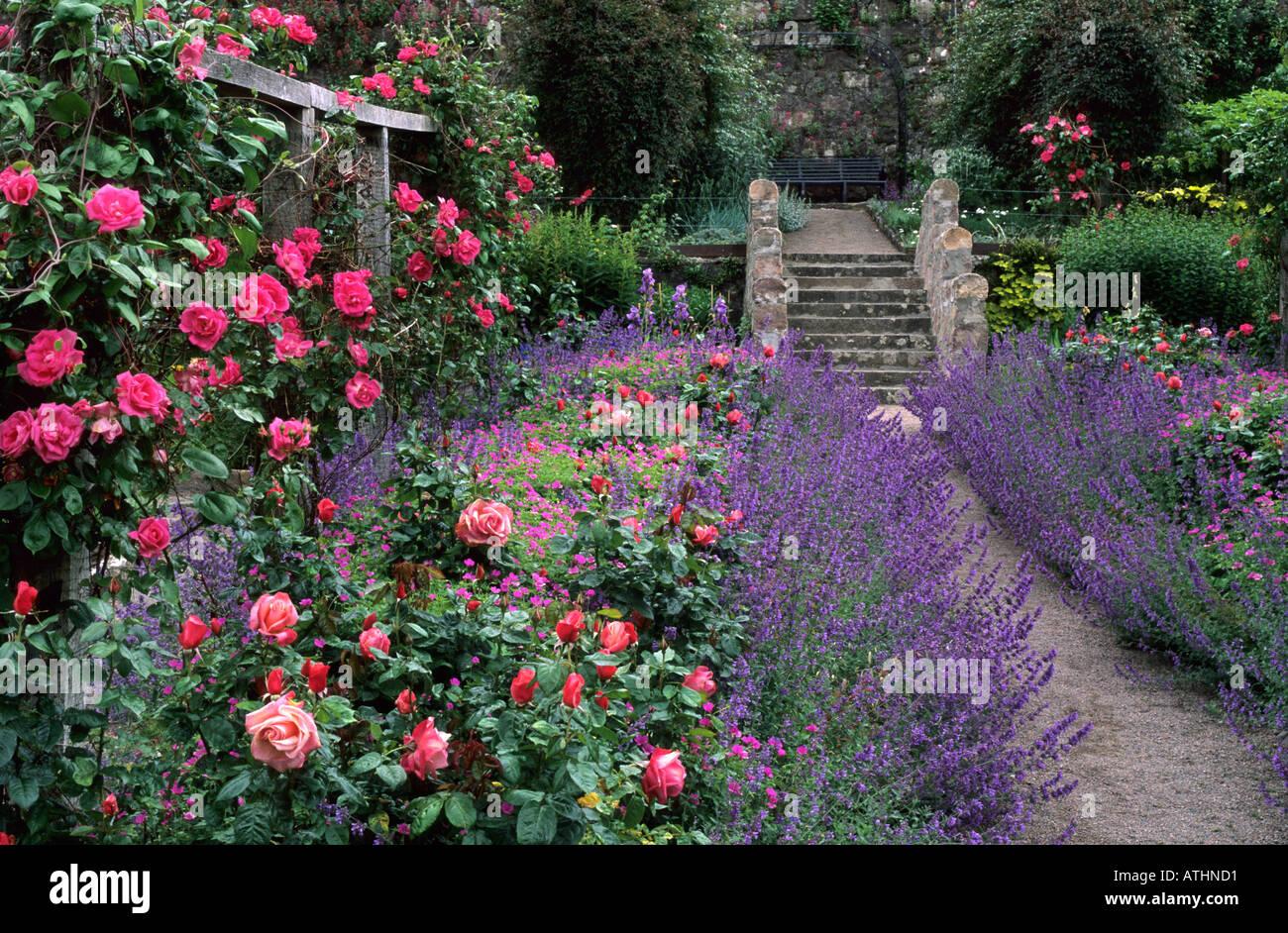 Inverewe Gardens Scotland UK Rose Garden Steps rose