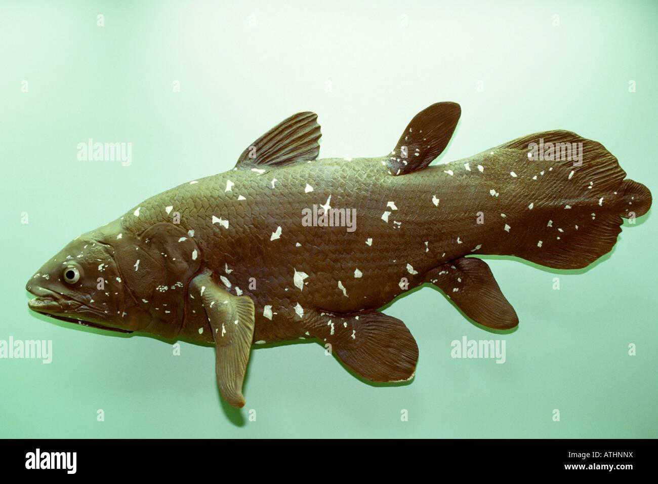 Colored cast - Coelocanth Latimeria Chalumnae Colored Cast Of Actual Fish