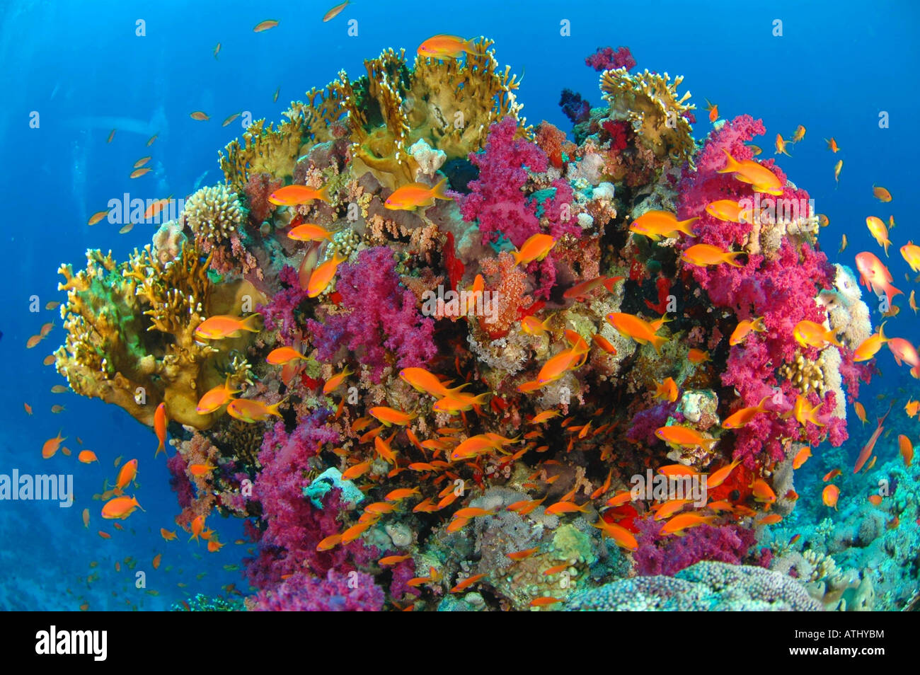 red sea coral colors instructions