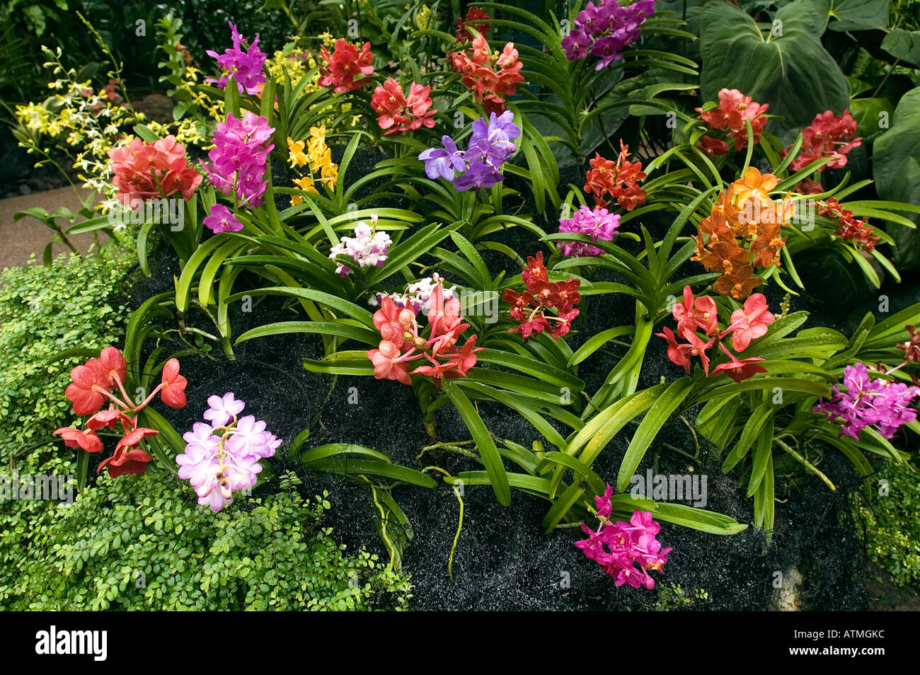 Charming Orchids In Orchid Garden Of Royal Botanical Gardens Singapore
