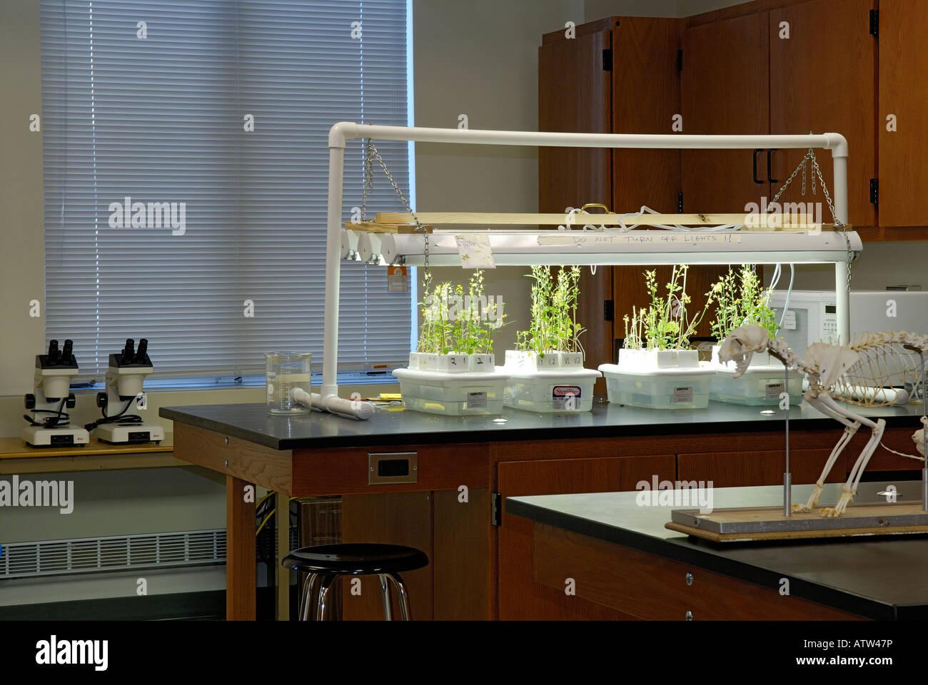 Modern High School Classroom ~ A modern high school biology classroom with cat skeleton