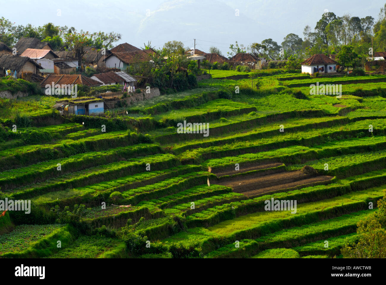 Terrace farming in koviloor near munnar kerala stock photo for Terrace cultivation