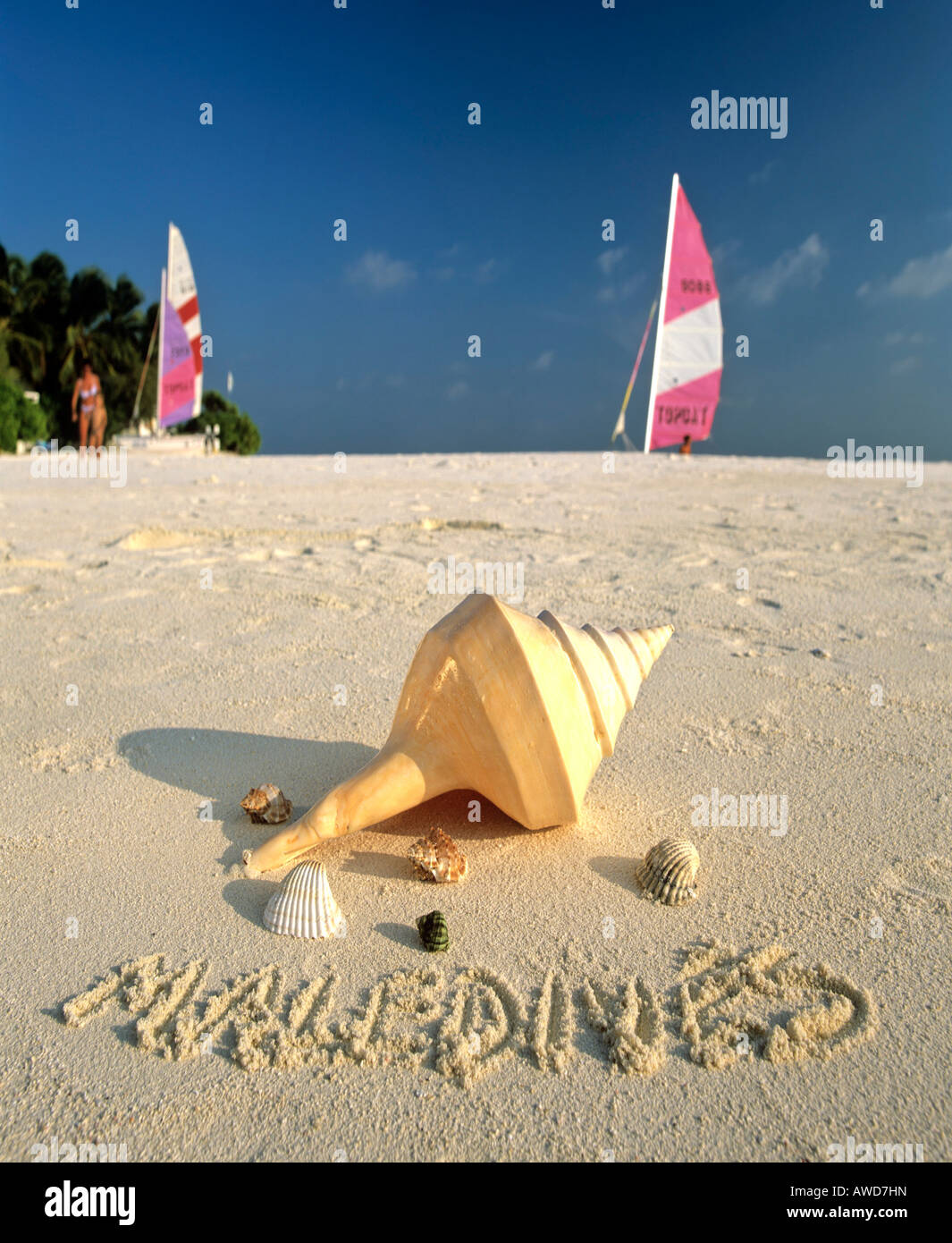 Shells on the beach Maldives written in sand Maldives Indian