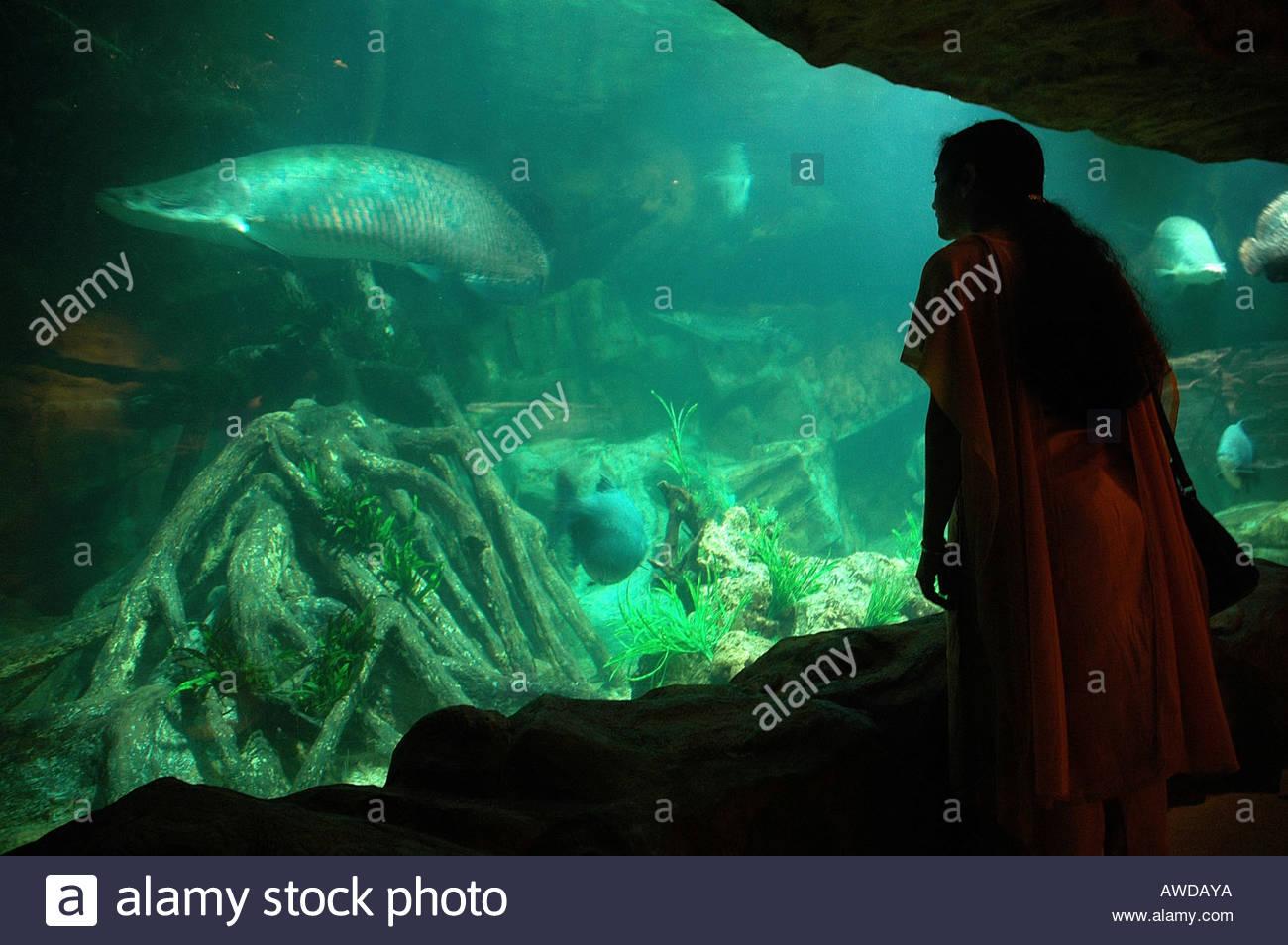 Fish aquarium in sentosa - Stock Photo Underwater Aquarium In Sentosa Singapore