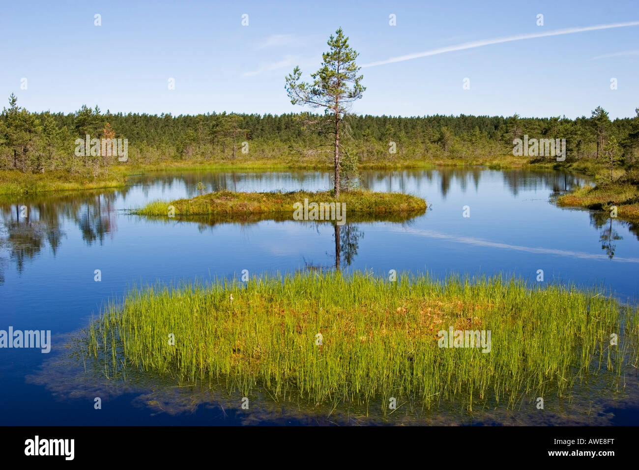 viru raba marsh landscape in lahemaa national park estonia europe stock photo