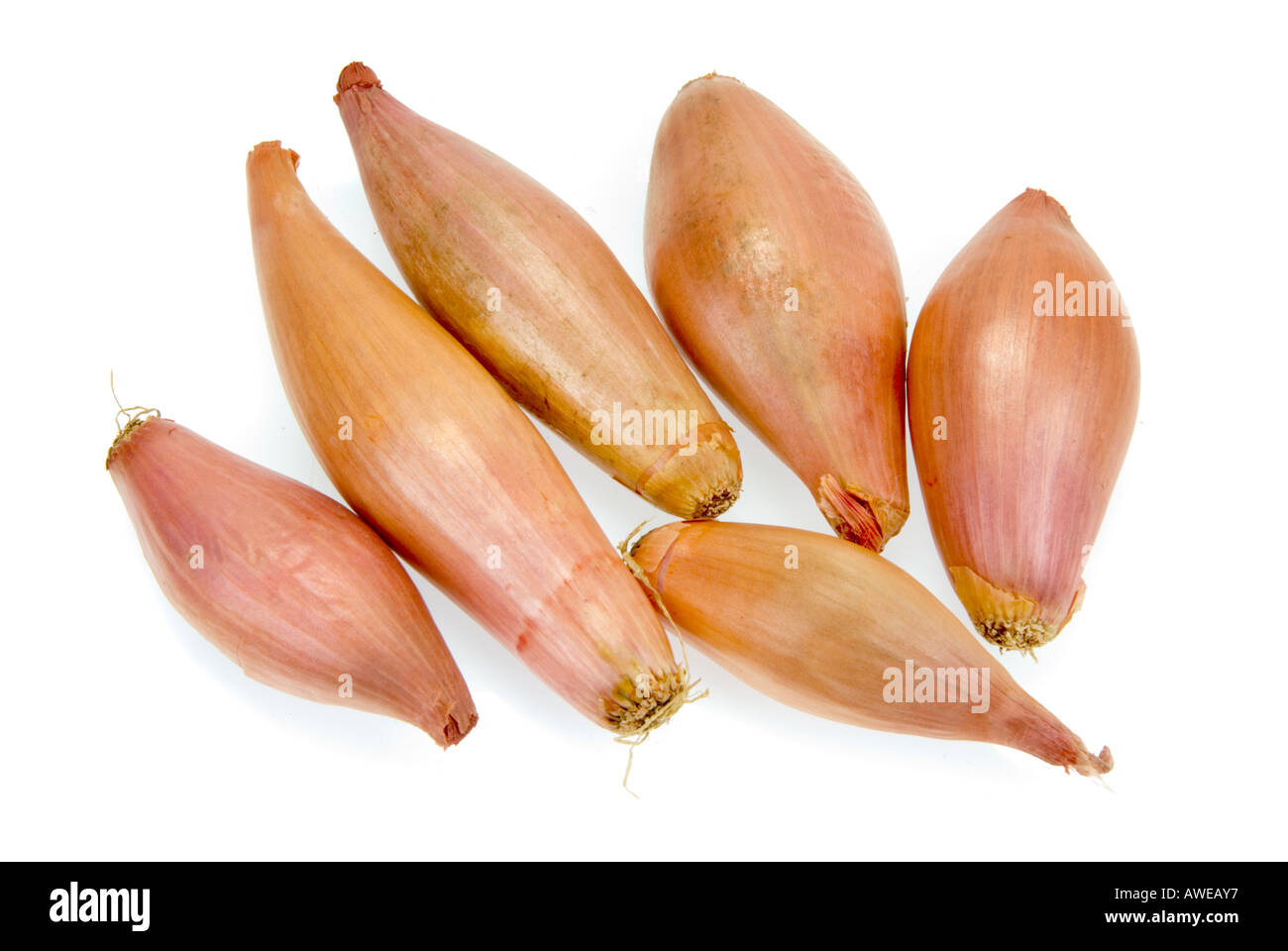how to grow shallots vs green onions