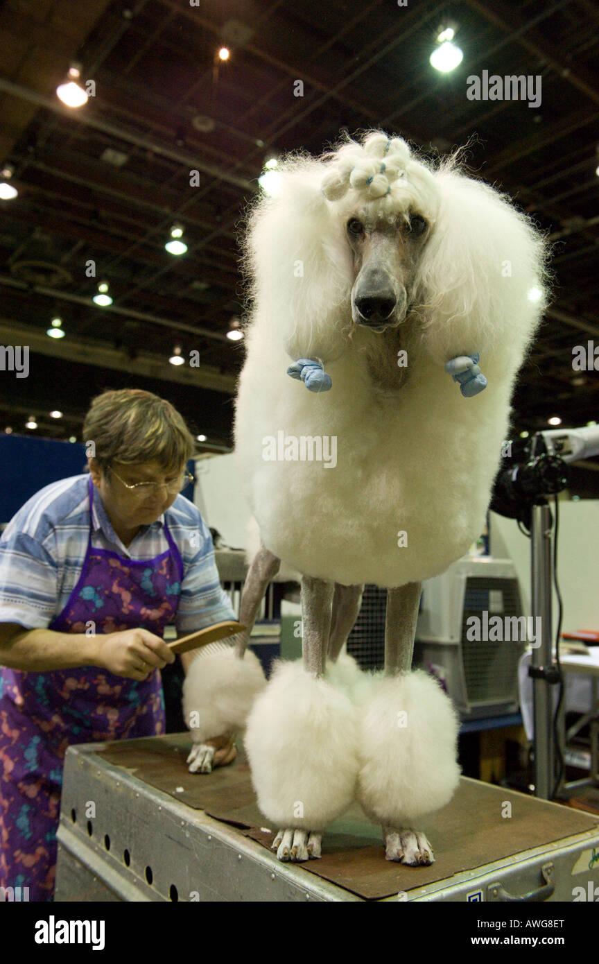 Detroit Kennel Club Dog Show